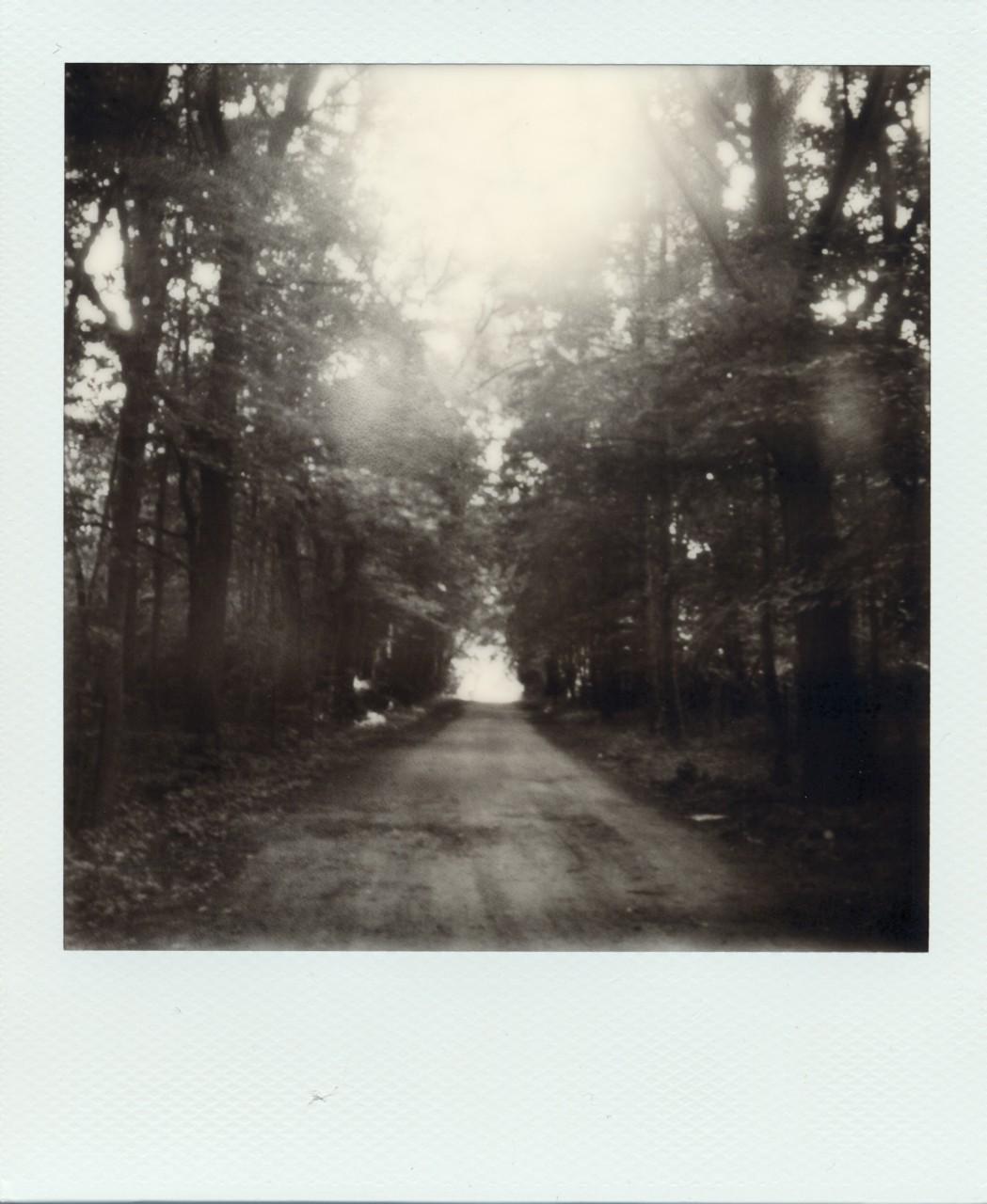 Polaroid Web_0016