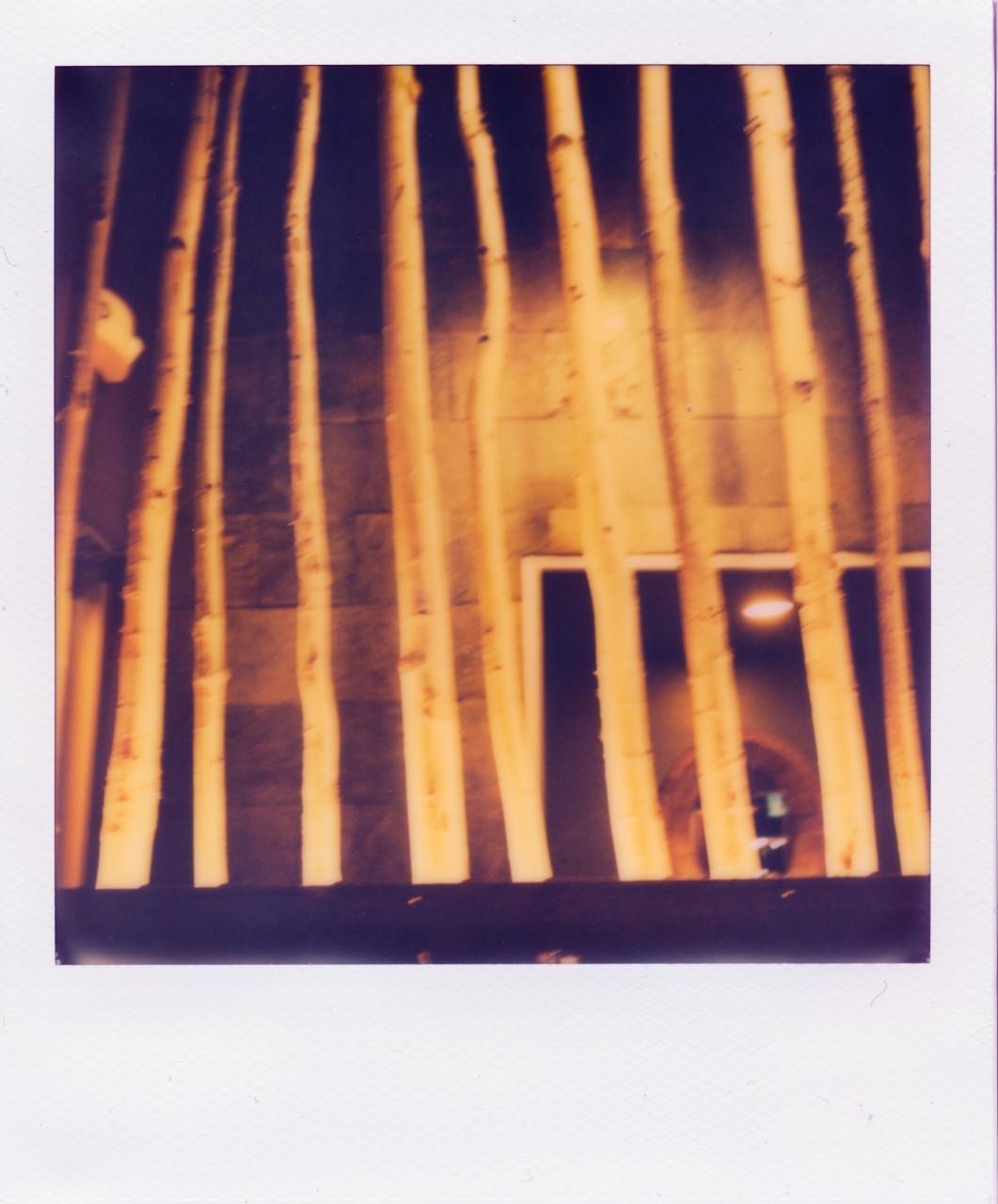 Polaroid Web_0022