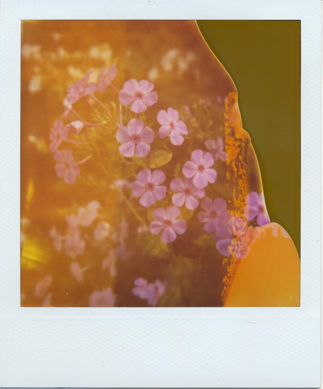Polaroid Web_0069