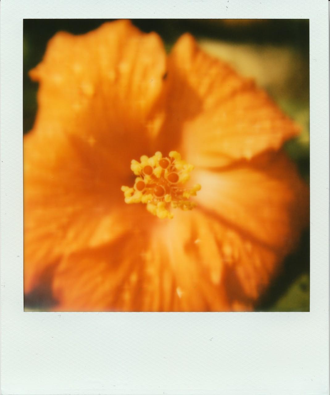 Polaroid Web_0078