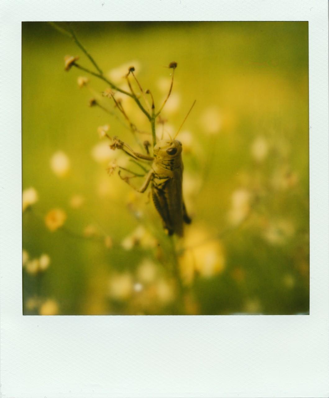 Polaroid Web_0080