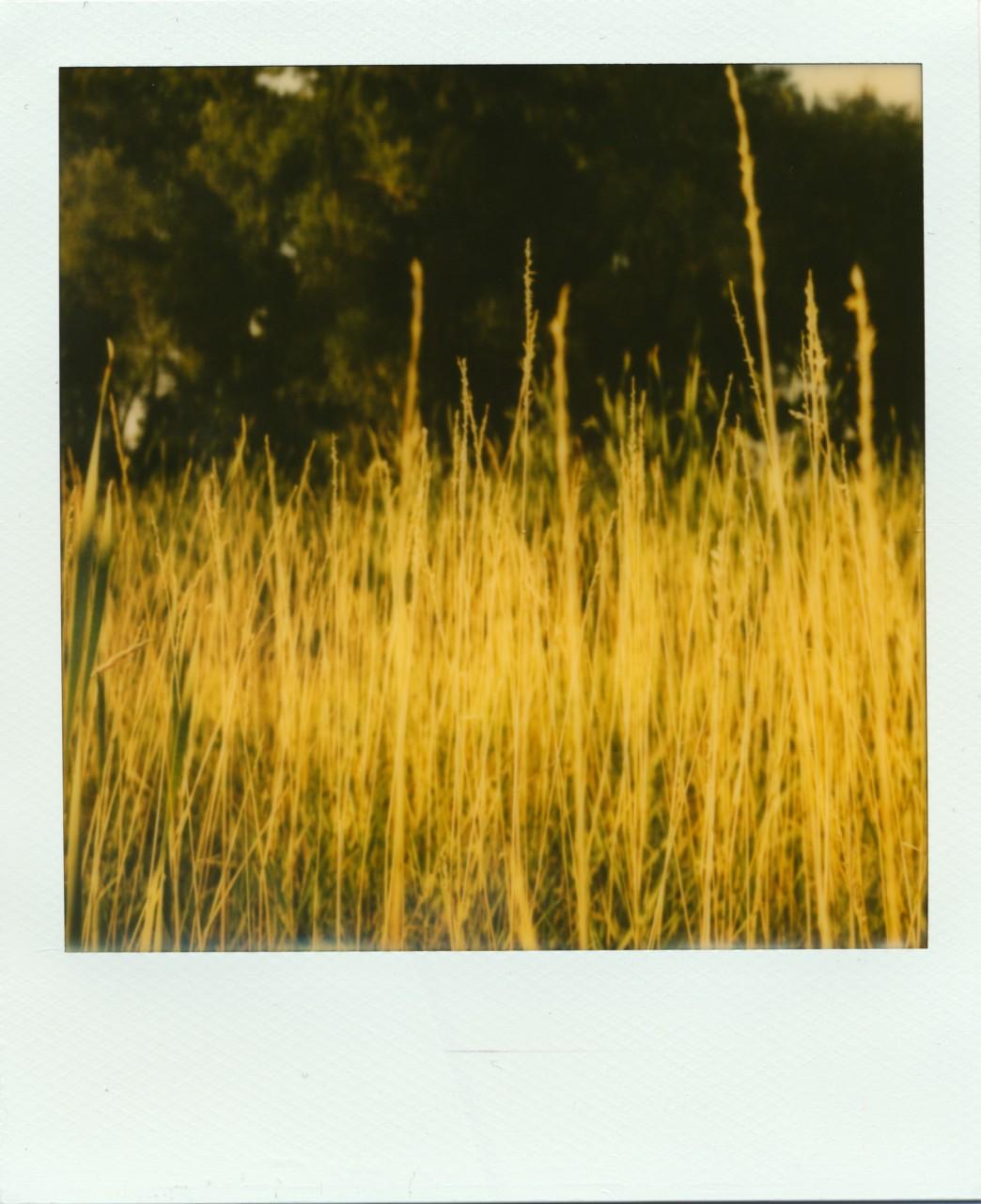 Polaroid Web_0081