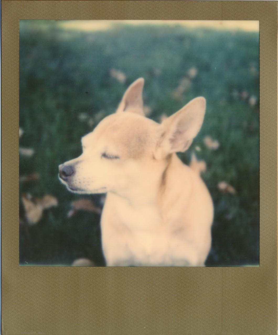 Polaroid Web_0085