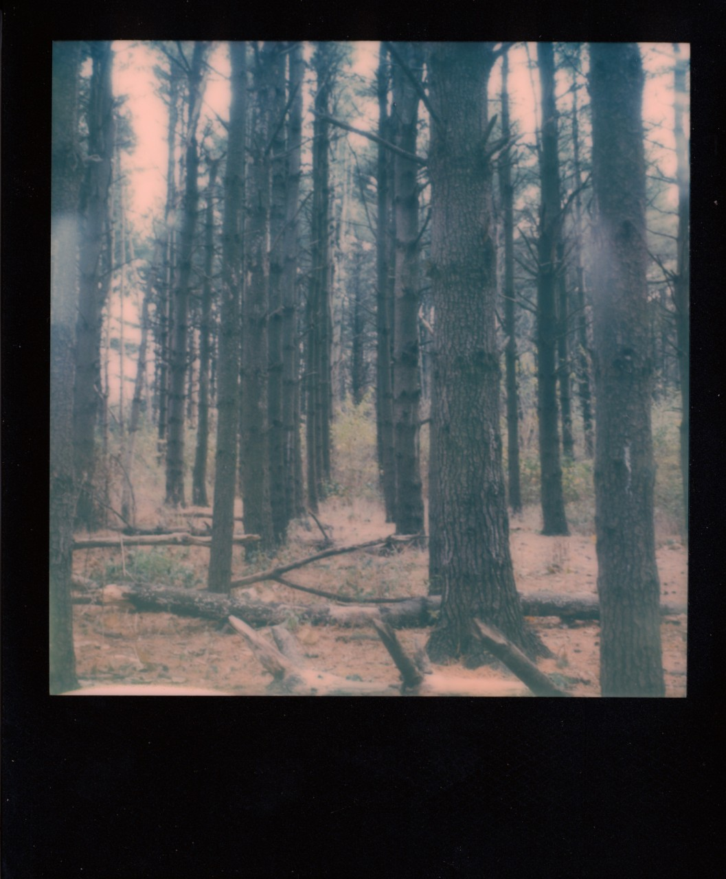 Polaroid Web_0136