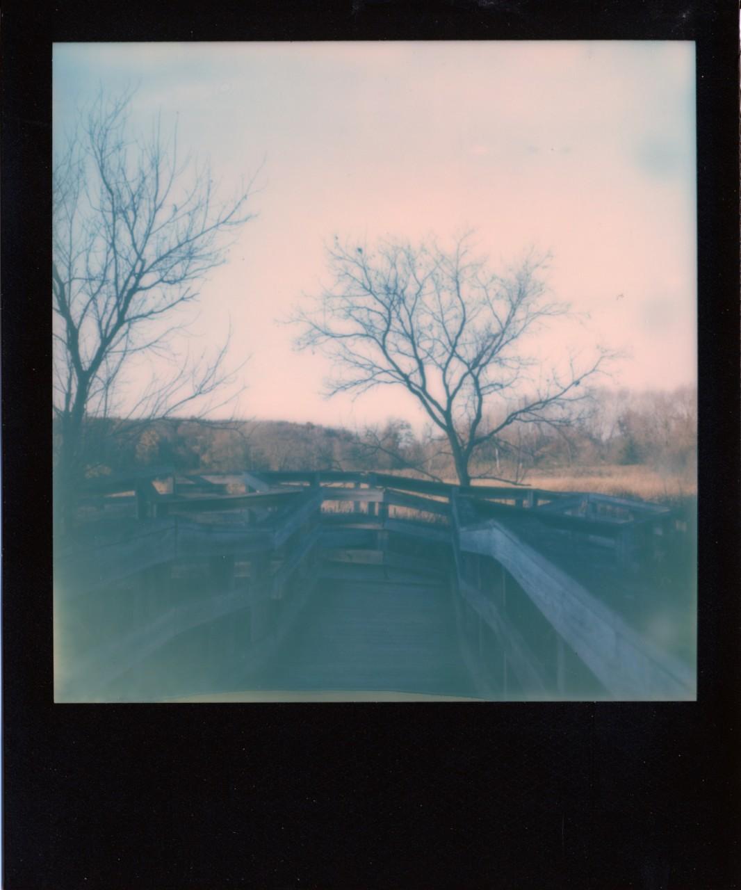 Polaroid Web_0137