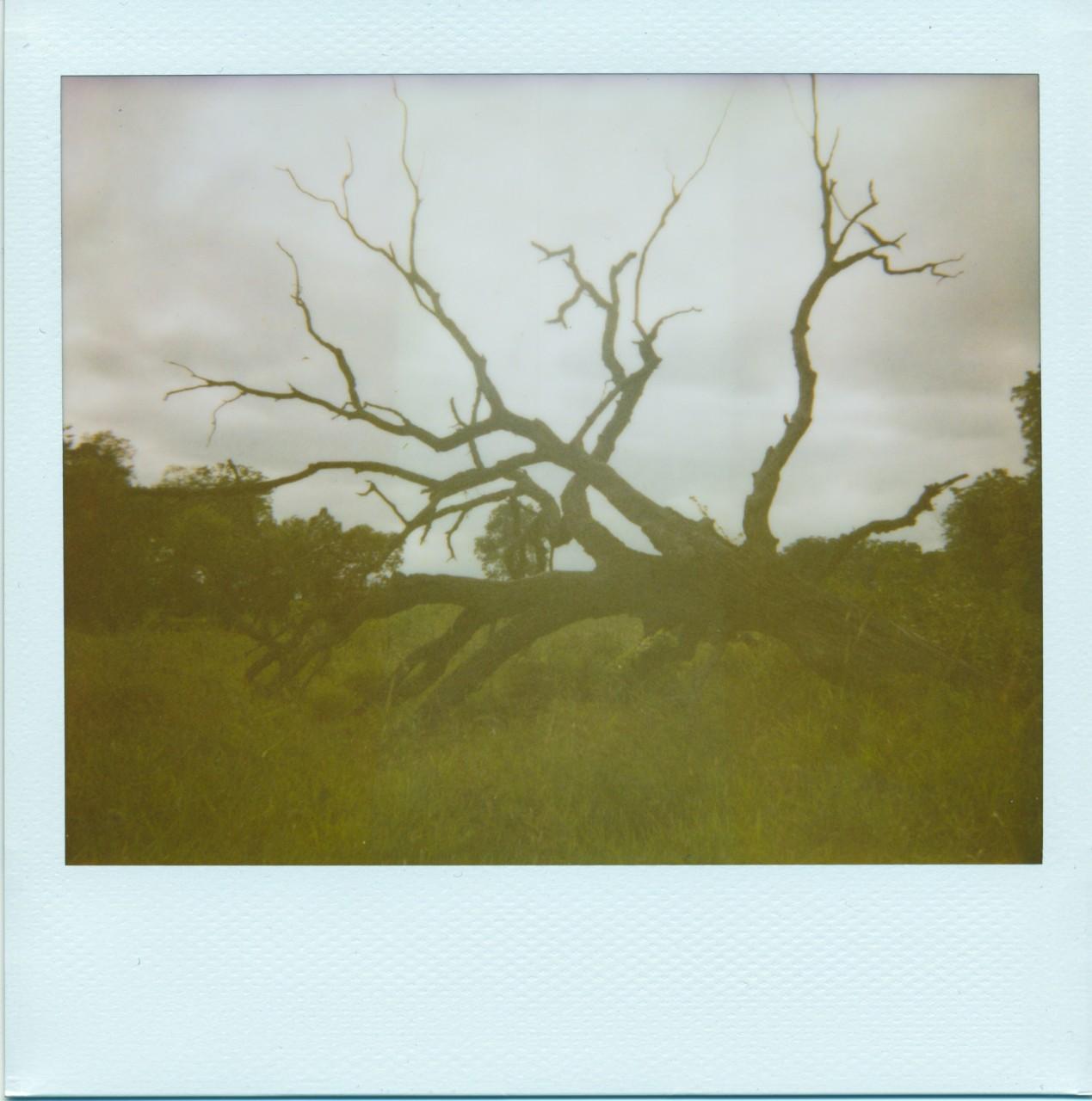 Polaroid Wedb_0018