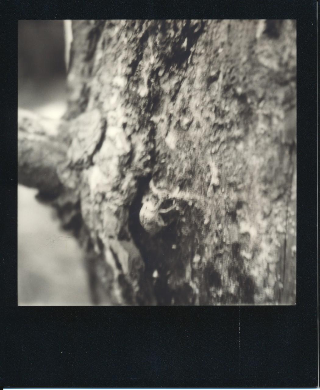 Polaroid-web_0001
