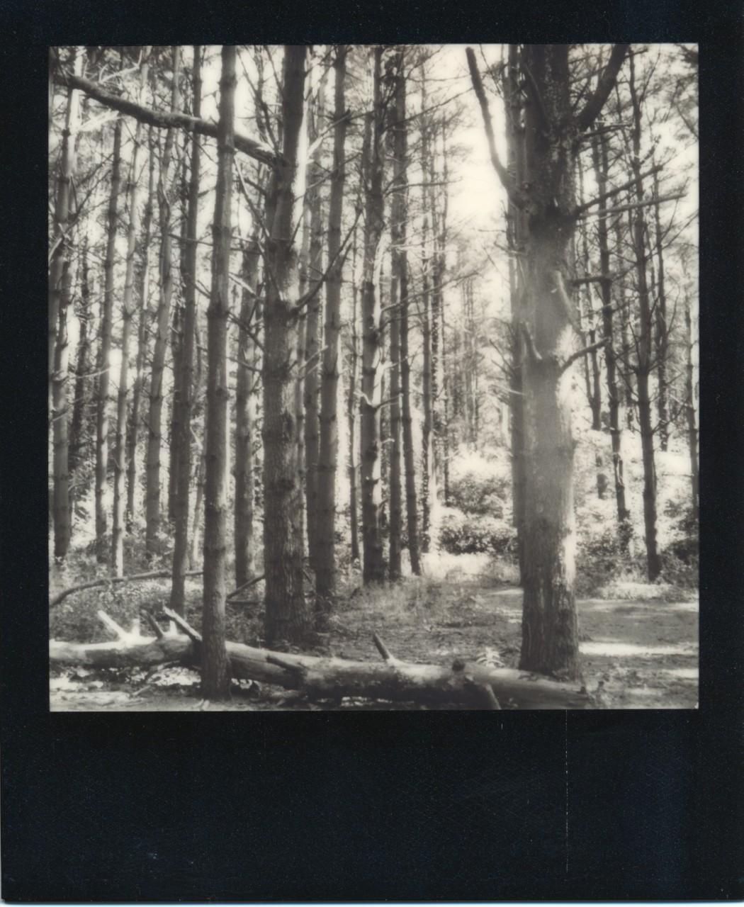Polaroid-web_0002